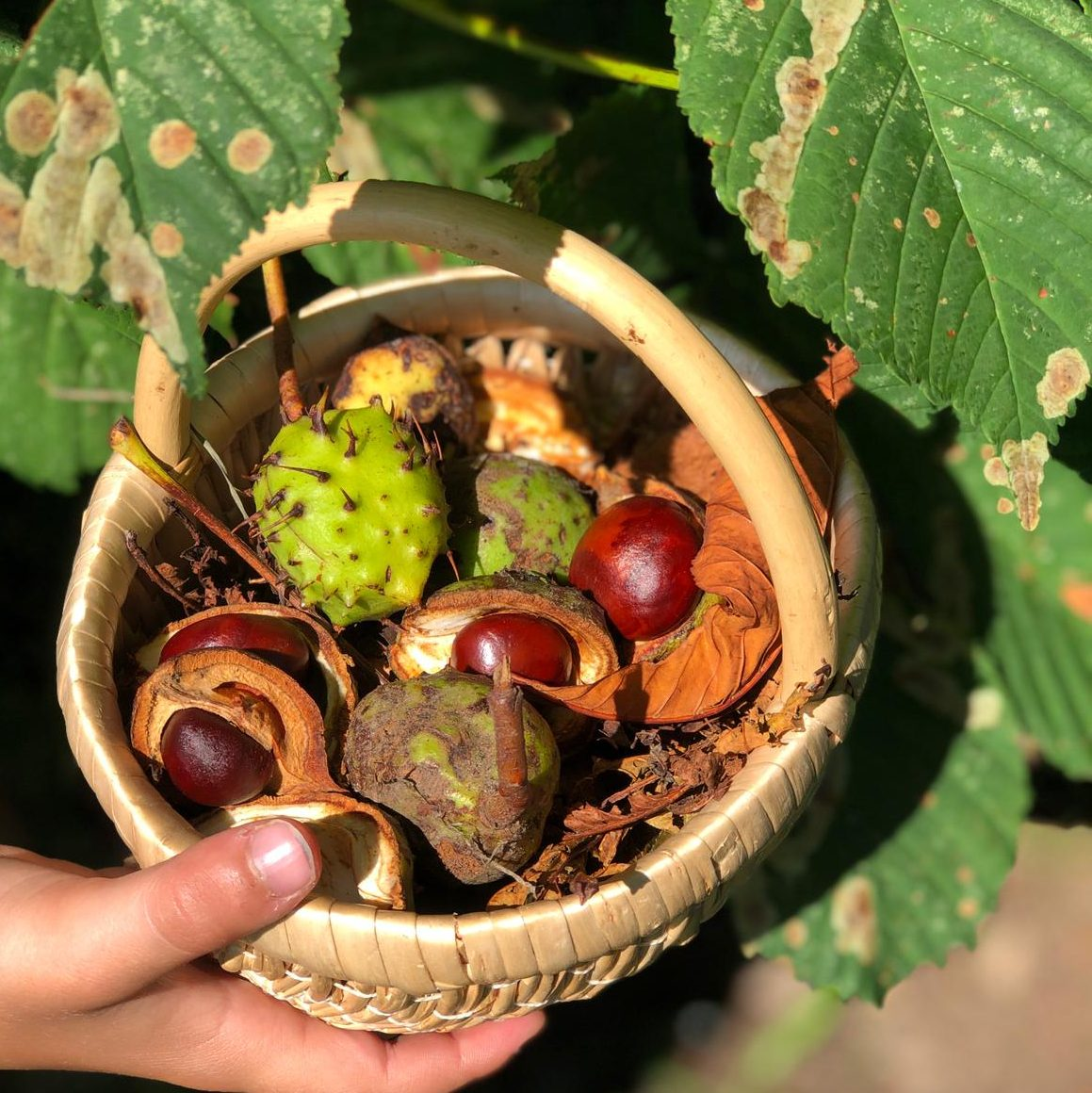 Outdoor play - autumn treasures