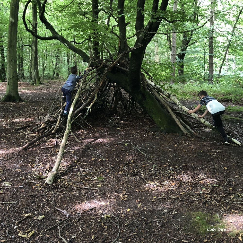 Dens in the forest